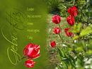 Geburtstag - liebe Wünsche zum heutigen Tag