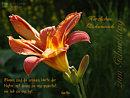 Herzlichen Glückwunsch ... Blumen sind die schönsten Worte der Natur ...
