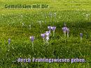 Gemeinsam mit Dir ... durch Frühlingswiesen gehen
